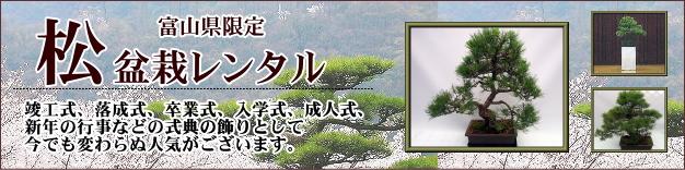 松盆栽のレンタル。
