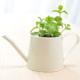 観葉植物を購入すると1ヶ月後無料でメンテナンスいたします!