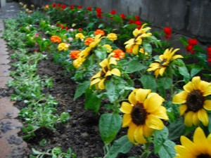 gardening000118