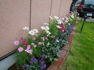 gardening000138