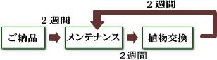 観葉植物レンタルのメンテナンス交換時期
