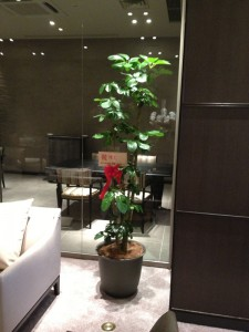 観葉植物レンタルをプレゼント