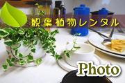 観葉植物レンタルのフォトギャラリー