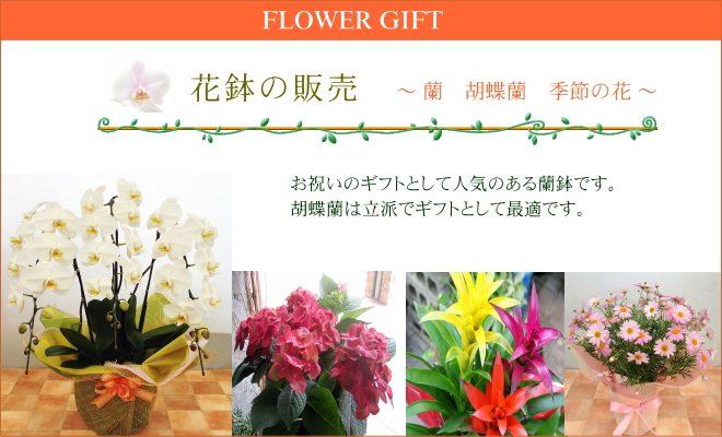 花鉢、胡蝶蘭の販売